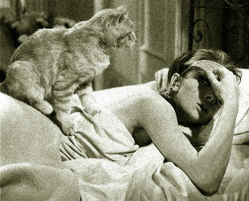 Gato i Holly