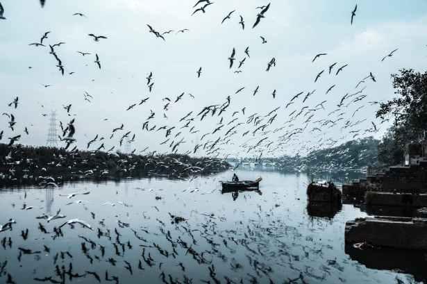 photo of birds flying during daytime